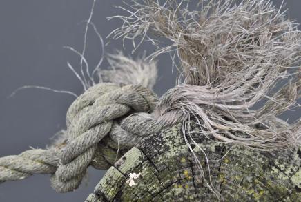 Knot_20081108_130318_Bodega_Bay_BCX_7029